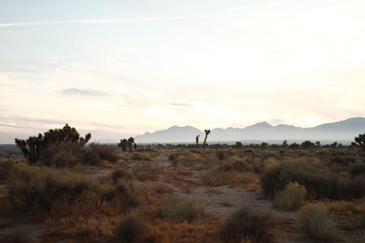 Desert Investor Quarterly